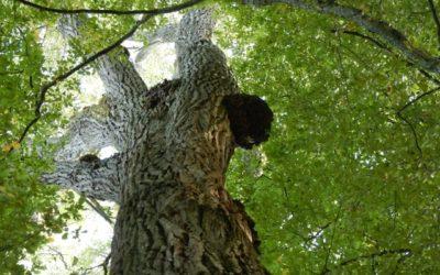 Concours photo : les arbres remarquables de chens